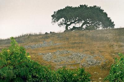 Reclining Oak