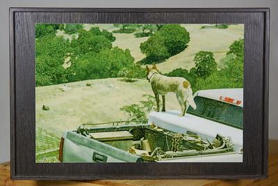 """Vineyard Dog"" 12x8"" aluminum print on 15x10 wood."