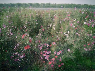 Highway Bouquet