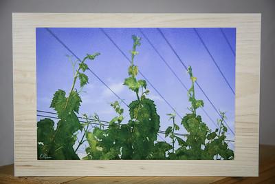 """Vine Symphony"" 12x8"" Oenograph print on aluminum/15x10"" wood"