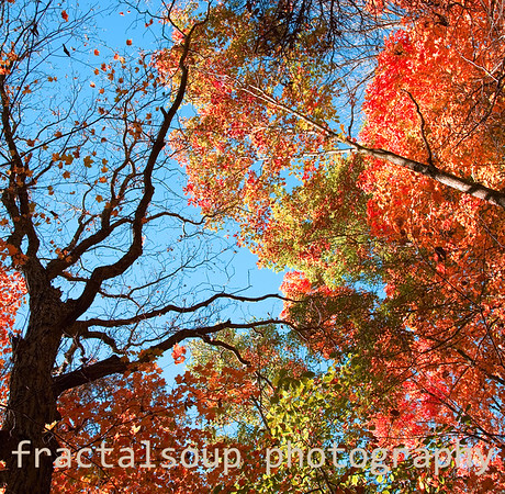 Vibrant Autumn Colors