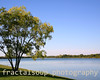 Tree at Edge of Lake, Blue Sky