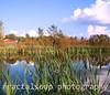 Autumn Farm Pond with Brilliant Reflections