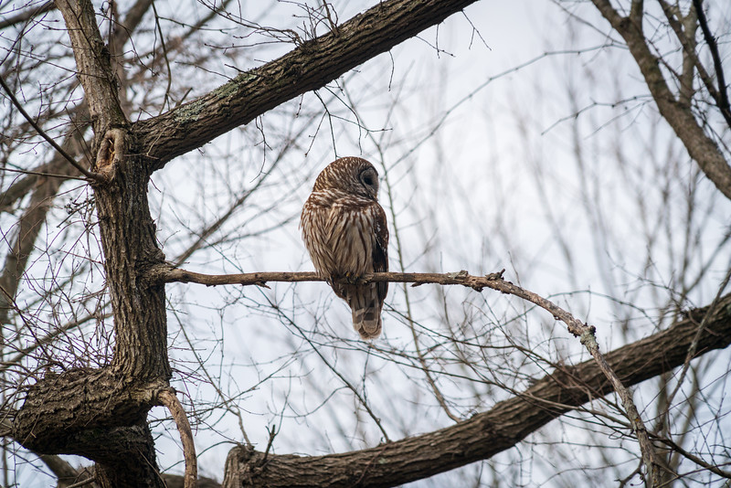 And Owl at Chickasaw National Recreation Area, Oklahoma