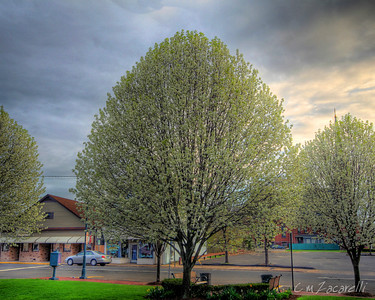 Trees surrounding the walling Green at the Train Station.