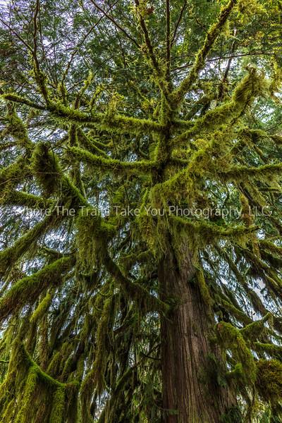 Masts Of Moss