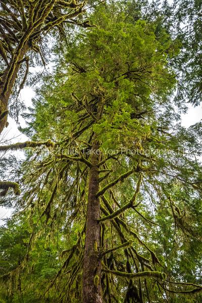 One Tall Tree
