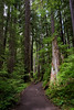 The hike through the rain forest to Sol Duc Falls was beautiful and peaceful.