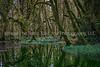 54.  A Scene Along Maple Glade Rainforest Trail