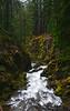 Sol-Duc-Falls-Trail-05-2011