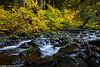 Sol Duc River Fall 10-2017