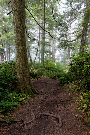 The path to Cape Flattery