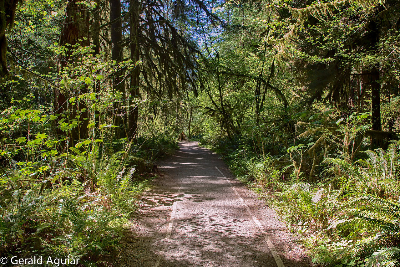Trail leaving Marymere Falls.
