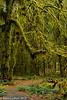 Hoh Rainforest Path 02-2013