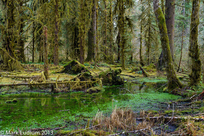 Hoh Rainforest 02-2013