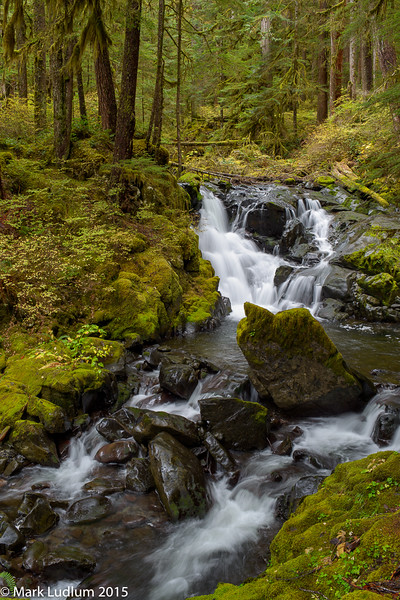 Lovers Lane Trail Sol Duc 2015