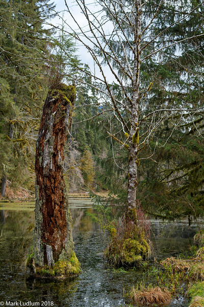 Hoh Rainforest Pond 2 03-2018