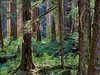 Sol-Duc-Trail-Woods-05-2010