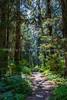 134. The Trail Through The Rain Forest