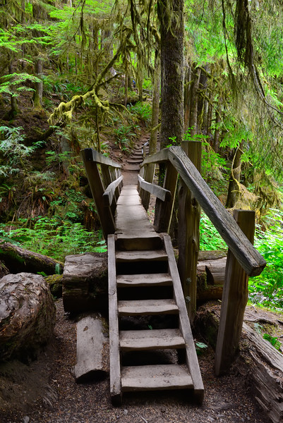 The hike to Marymere Falls