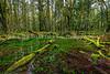 53.  A Scene Along Maple Glade Rainforest Trail