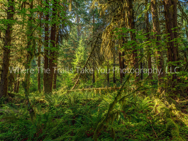 71.  Scenery along the Hall of Mosses Trail