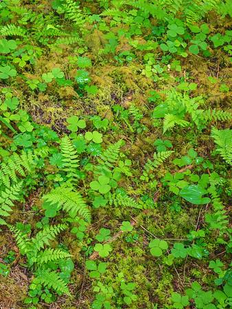 Rainforest Carpret