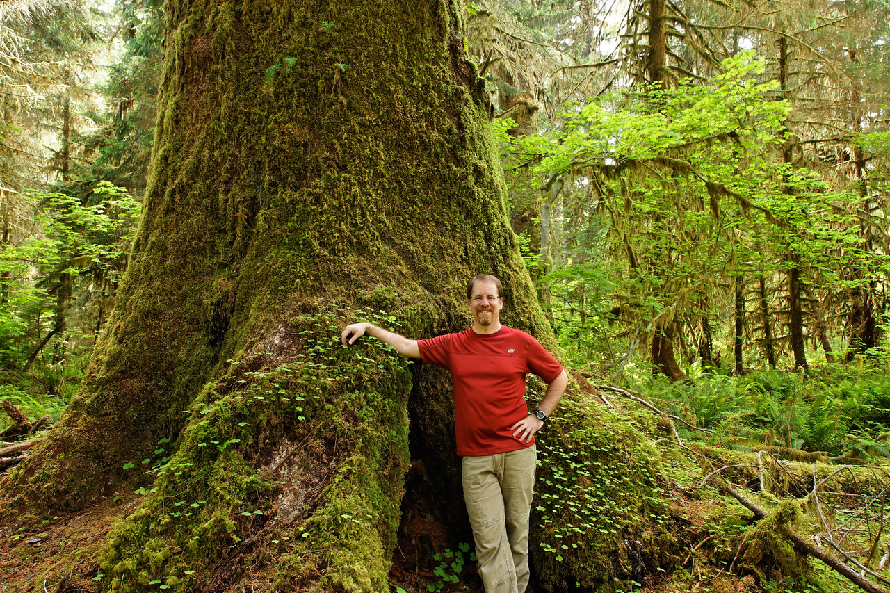 To give some perspective on how big the trees really are