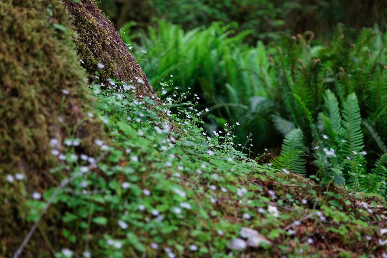 Tiny flowers, Hoh Rain Forest