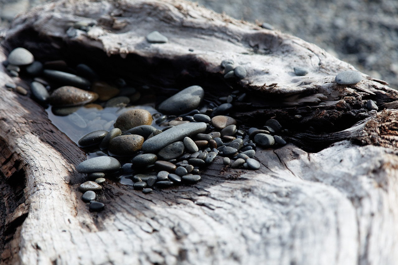 Rocks washed up onto driftwood by the tides