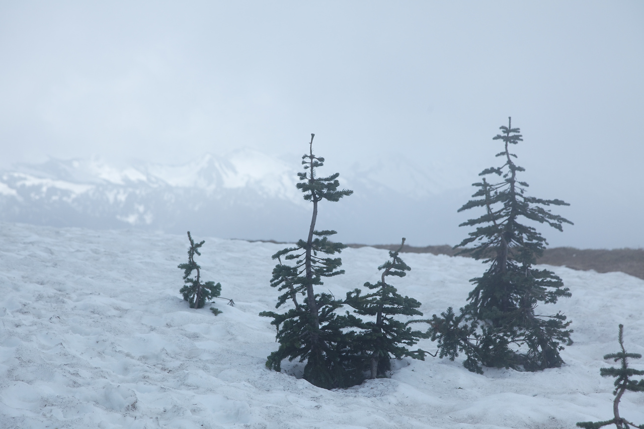 Mountains, Fog, and Snow - on the Summer Solstice