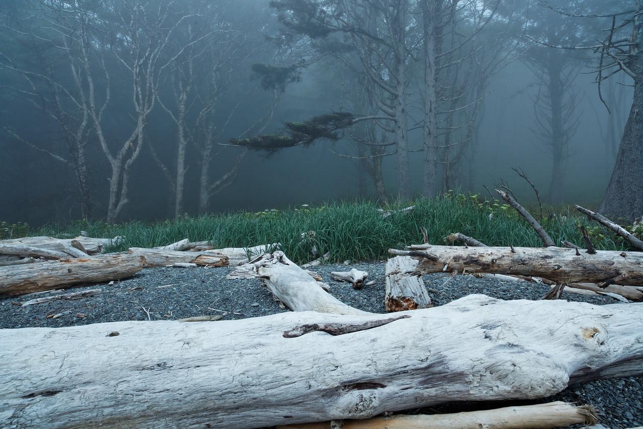 Fog on shore