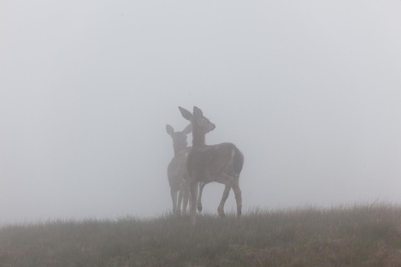 Deer in the clouds