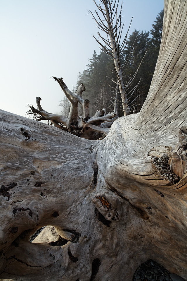 Wide angle view of drift log