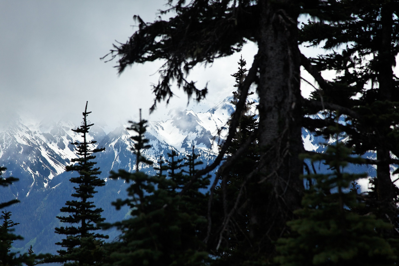 Olympic Mountains through the trees