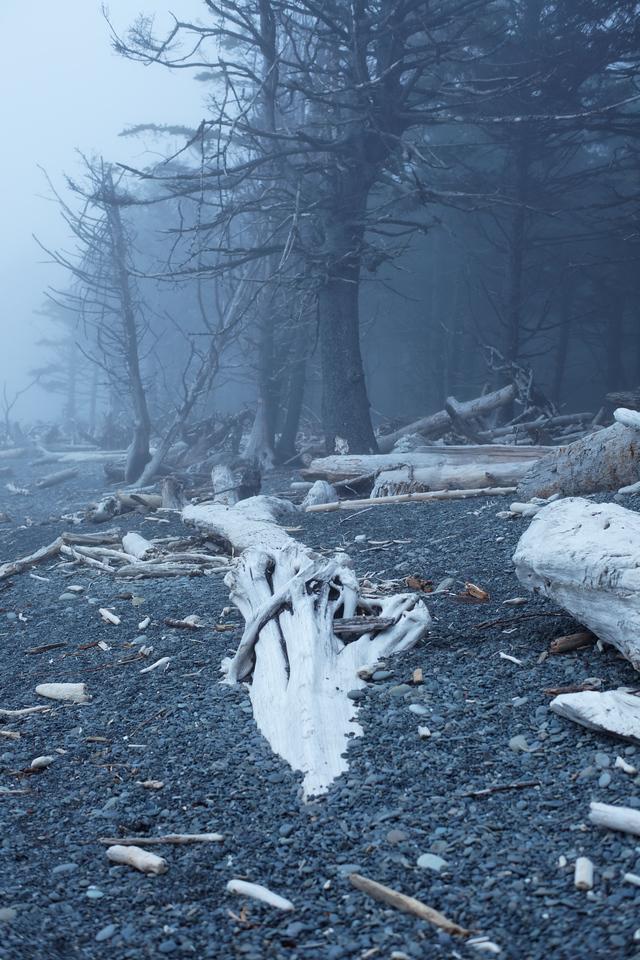 Buried driftwood and fog