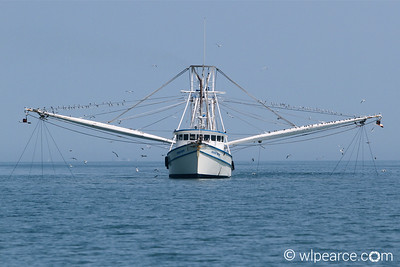 Apalachee Warrior with nets down, just offshore. Get notifications via: