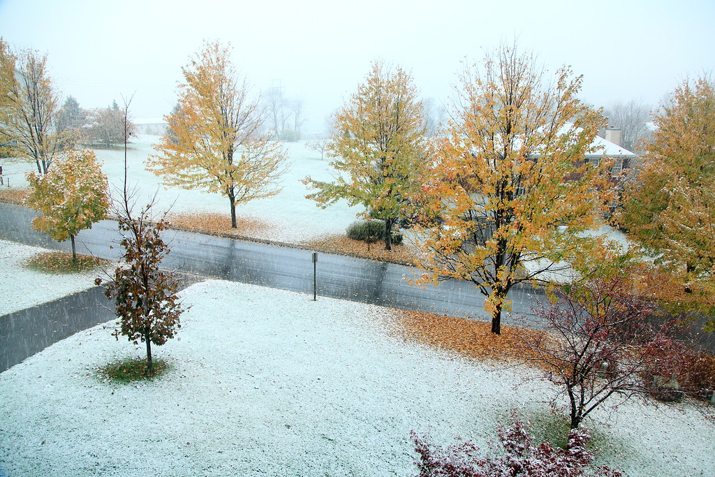 Our front yard. October 29, 2011.