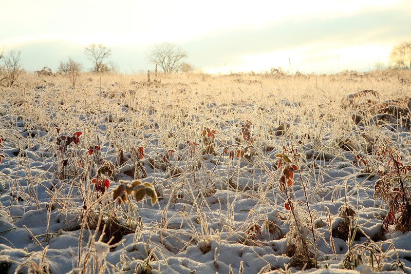 Frosty field at dawn under season's first snow, October 30, 2011.  Oak Hall, PA.