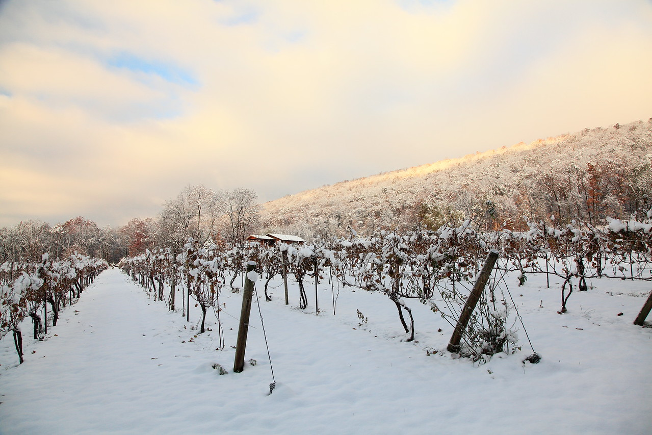 Mt. Nittany Winery.  Sunrise on season's first snow. October 30, 2011.  Linden Hall, PA.