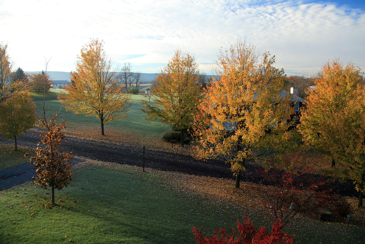 Our front yard, October 28, 2011.