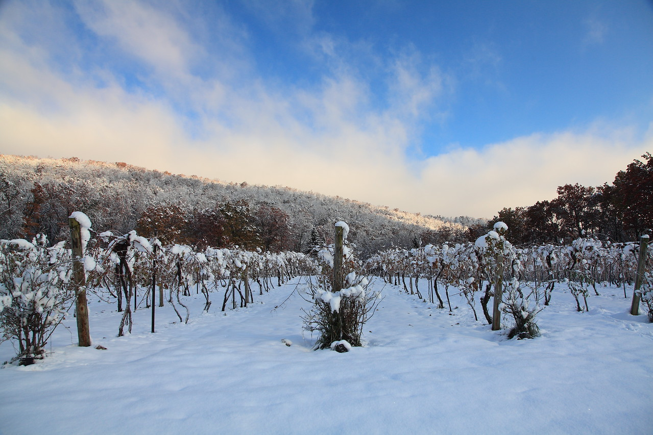 Mt. Nittany Winery, first snow of the season. October 30, 2011. Linden Hall, PA.