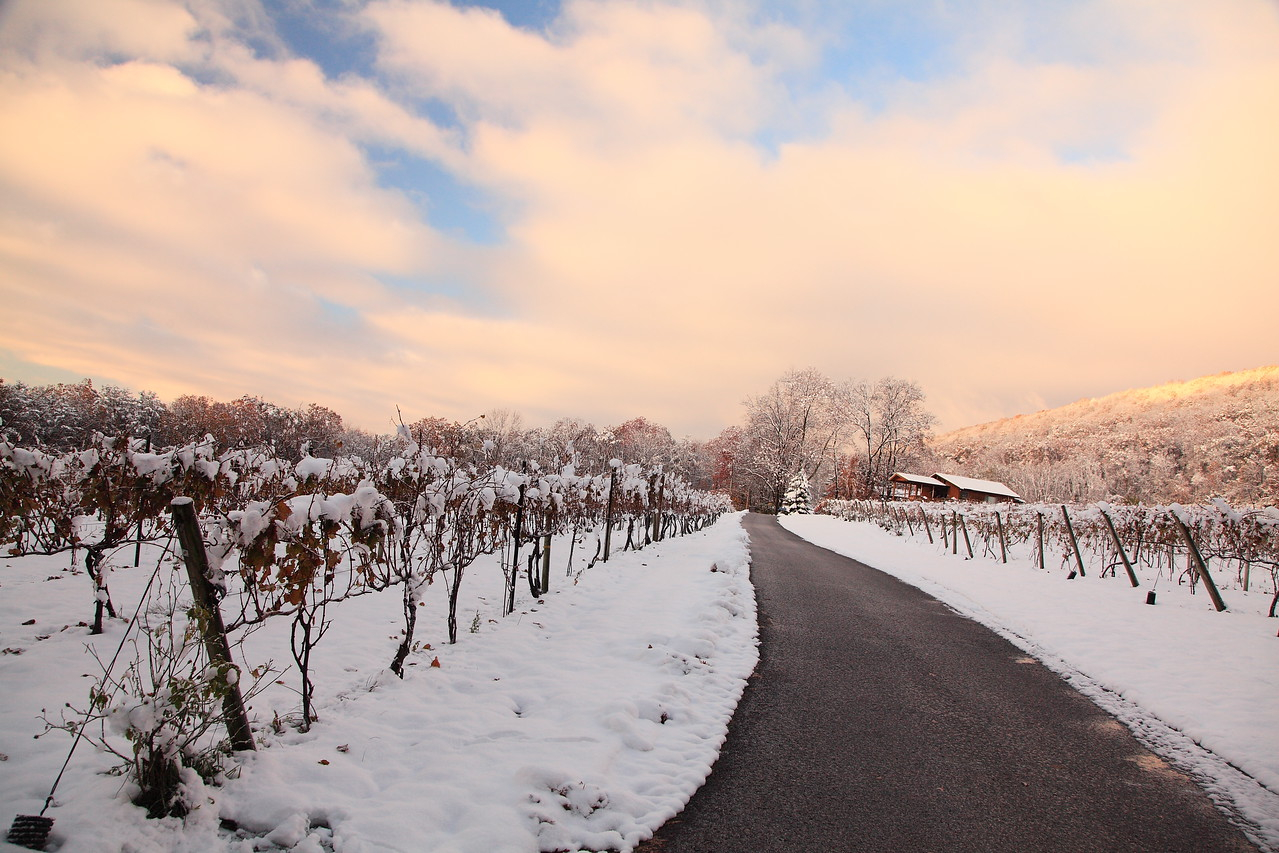 Mt. Nittany Winery under season's first snow, October 30, 2011.  Linden Hall, PA.
