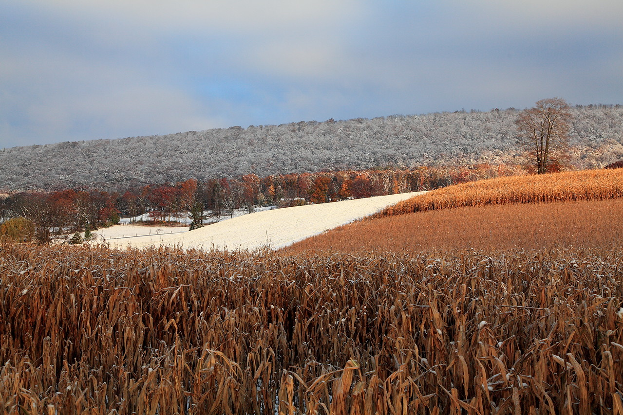 Mt. Nittany from Brush Valley Road, Linden Hall, PA.  Early snow, October 30, 2011