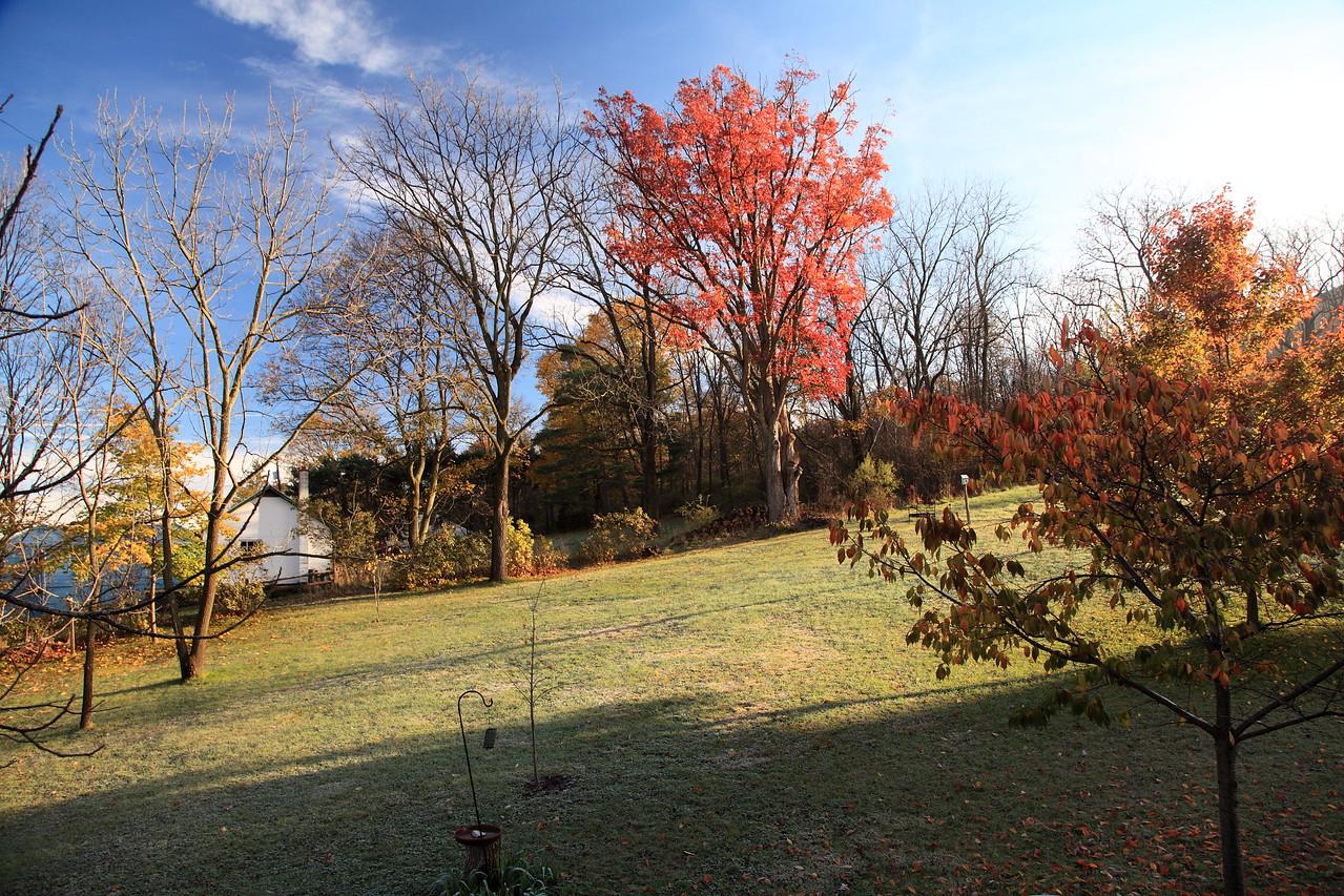 Our backyard, October 28, 2011.