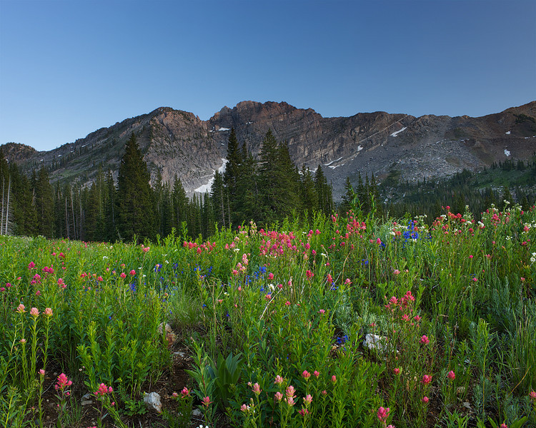 Albion Basin Color of Summer