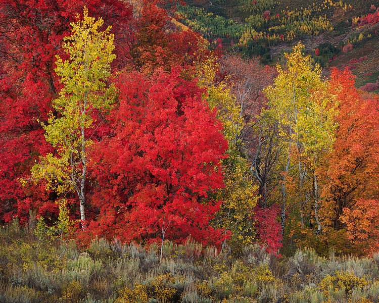 Wasatch State Park Fall