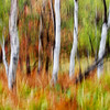 Abstract Colors of Fall