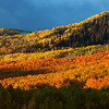 Color of Aspens