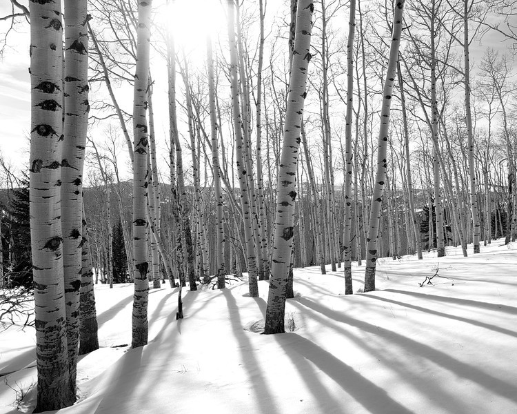 Dixie Winter Aspens